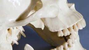 Una rotura de mandíbula requiere atención médica inmediata.