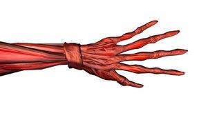 El entumecimiento y hormigueo puede ser causado por un un nervio comprimido.