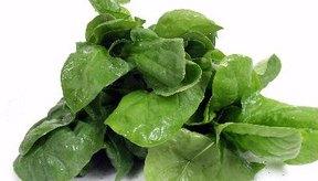La espinaca está disponible en tres variedades: planas, col rizada o semirrizada.