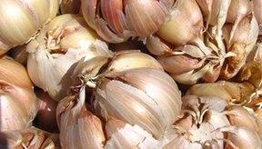 El ajo puede ayudar a reducir el colesterol y mejorar la circulación.