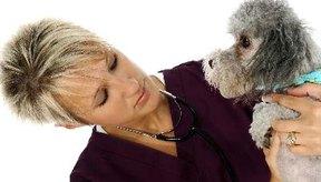 Nunca desparasites a un gatito enfermo o muy joven sin antes consultar con un veterinario.