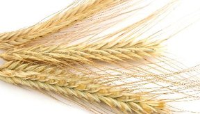 El trigo es un alérgeno común.