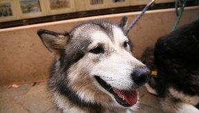 Sigue el consejo de tu veterinario antes de dispensar cualquier medicamento a tu mascota.