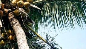 El aceite de coco es más saludable en su forma más natural y sin refinar.