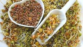 Los brotes son semillas en germinación que contienen azúcares simples, vitaminas, minerales, antioxidantes y clorofila.