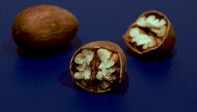 Las nueces pecan son energéticamente densas y contienen altos niveles de grasas insaturadas.