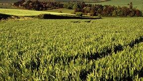 Los cultivos son activos biológicos.