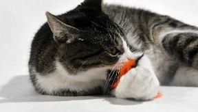 Los gatos pueden contagiarse de enfermedades por medio de mordidas, arañazos y cosas que comen.