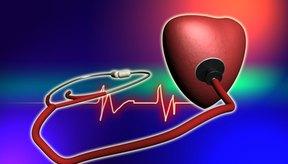 El ejercicio aeróbico regular lleva a desarrollar un corazón más grande y fuerte.