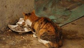 Los gatos saludables tienen un apetito saludable.