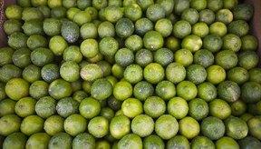 Las limas son excelente fuente de vitamina C como ácido ascórbico.