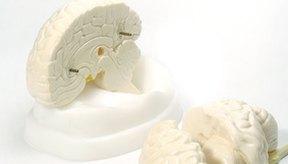 Los científicos están tratando de descubrir los secretos del cerebro.