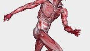 El glúteo mayor, medio y menor constituyen el grupo más grande de los músculos del cuerpo y se encuentran en las nalgas.