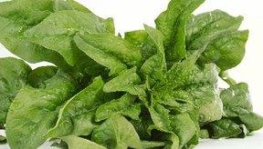 Las verduras de hoja verde oscuro como las espinacas contienen altas cantidades de vitamina K.