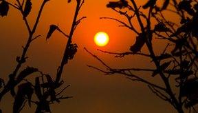Si tienes áreas hiperpigmentadas por el acné mantente alejado del sol.