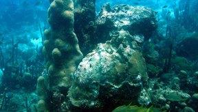 El buceo libre puede ser una manera divertida de experimentar los arrecifes de coral bajo el agua.