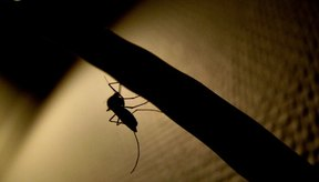Puedes reducir la hinchazón cerca del ojo por una picadura de mosquito.