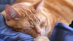 El resfriado de tu gato puedes ser curado en casa.
