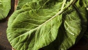 Los diabéticos pueden combatir la inflamación naturalmente con la col berza.