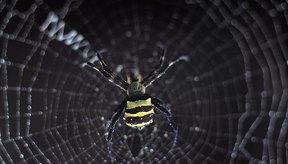 La mayoría de las arañas no son peligrosas.