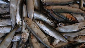 Las anchoas son ricas en purinas.