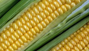 El maíz dulce es un excelente fuente de nutrientes y de energía.