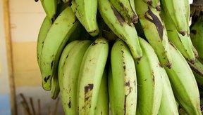 Los plátanos son una de las pocas frutas que contienen cantidades significativas de almidón.