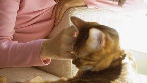 Si tu gato tiene picazón, manchas costrosas debajo de su pelaje, puede que esté padeciendo una grave enfermedad de la piel.
