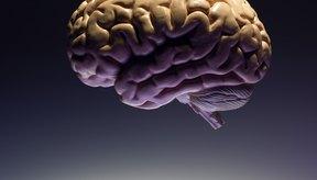 El cerebro se asegura que el corazón otorgue la cantidad de oxígeno requerida por tus músculos.