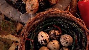 Los huevos de codorniz te brindan proteína, hierro y colina.