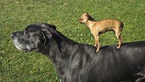 Diferentes animales tienen similitudes en su sistema tegumentario.