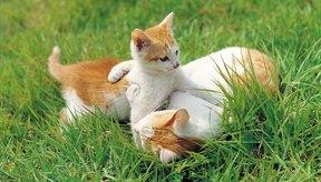Siempre vigila a tu gato con cuidado después de la administración de diazepam.