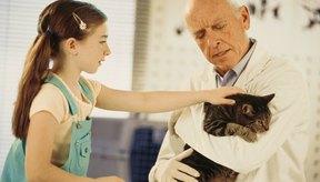 Los gatos pueden sufrir una intoxicación grave por el veneno de ratas.