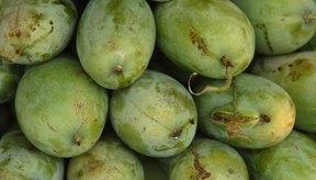 Los mangos pueden desencadenar reflujo ácido.