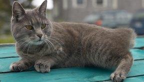 No le des diazepam a una gata preñada, o que se sospecha está embarazada o una madre lactante.