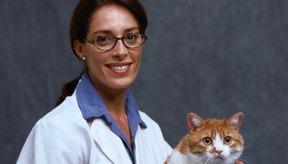 Sigue las instrucciones del veterinario sobre cómo cuidar a tu gato en casa.