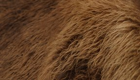 Curtir pieles con los antiguos métodos naturales es económico y muy gratificante.