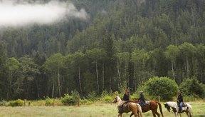 Muchas expediciones por Alaska en caballo incluyen todas las comidas y bocadillos.