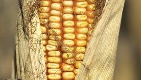 Selecciona granos hechos con el grano entero de maíz, y no de maíz refinado.