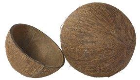 El azúcar de coco se hace de la savia del árbol de coco.