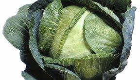 El repollo verde es rico en vitamina C y, algunas veces, fibra.