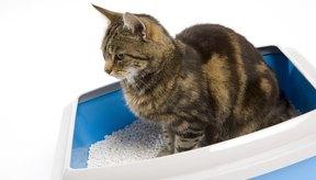 Si un gato no recibe tratamiento de inmediato ante una afección urinaria, podría entrar en coma y morir.