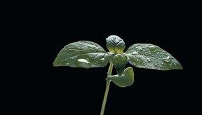 Los productos a base de soja son ricos en fitoestrógenos.