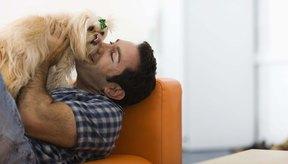 Los perros pueden ser una gran fuente de consuelo.