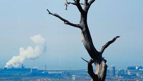 La lluvia ácida puede matar bosques.