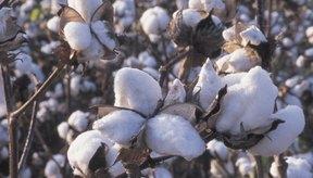 El algodón es la fibra mas usada en el mundo.