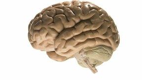 Pararse de cabeza es bueno para el cerebro.