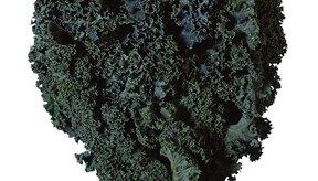Las verduras como la col rizada tienen un alto valor nutricional.