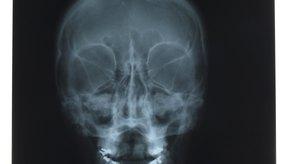 Los órganos son protegidos por la estructura ósea.