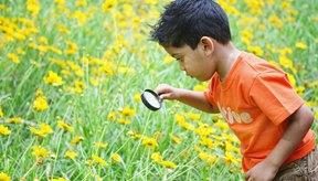 Benadryl puede ayudar a los niños a disfrutar de la naturaleza sin síntomas de alergia.